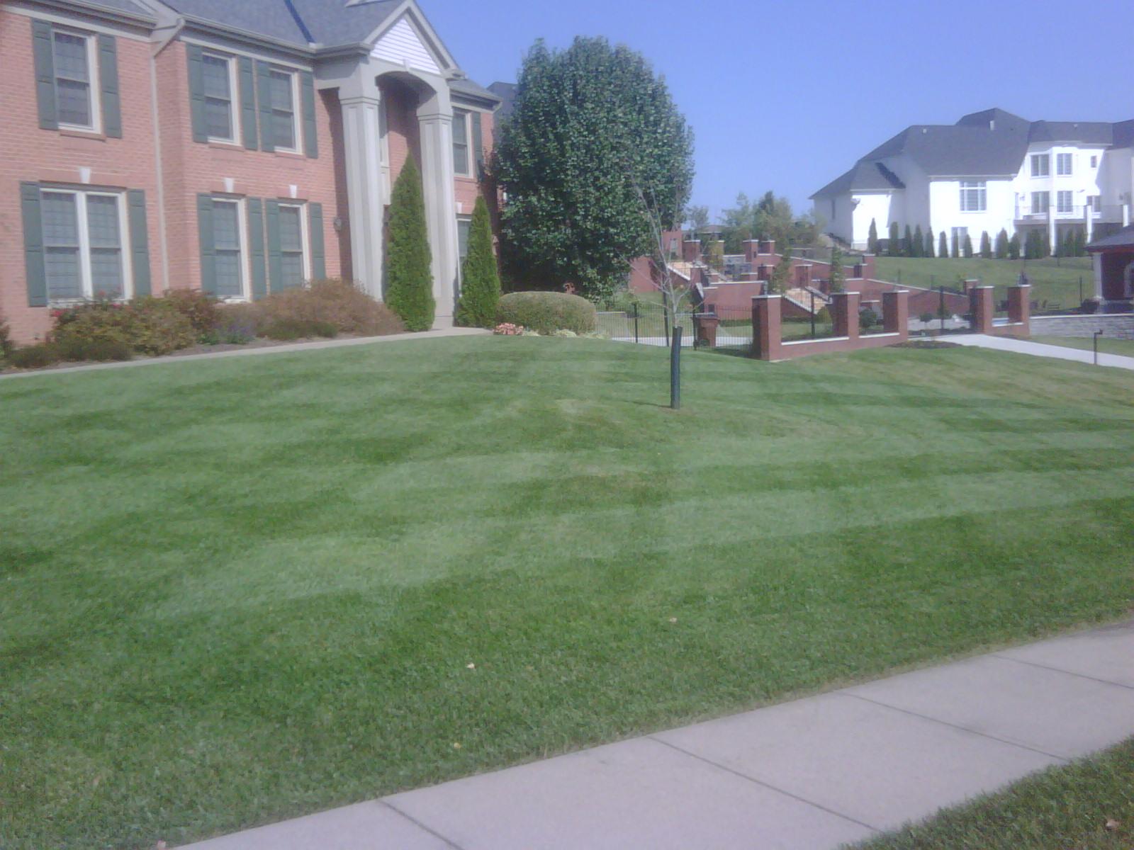 Doug's Yard